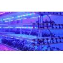 Светодиодные фито светильники