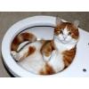 Как приручить кошку к автоматическому туалету KOPFGESCHEIT
